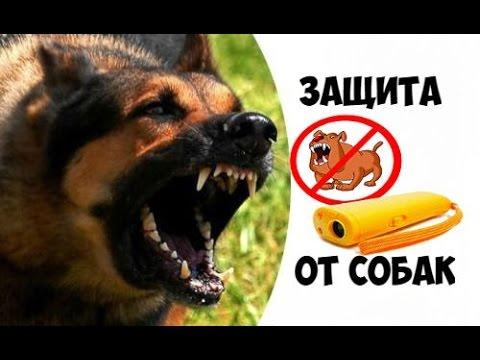 Отпугиватель собак с алиэкспресс видео ультразвуковой отпугиватель грызунов комаров riddex 438
