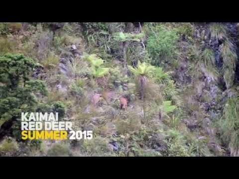 Kaimai Ranges: Red Deer Hunting Summer 2015