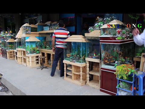 Aquarium Fish Shop Katabon, Dhaka - Aquarium Accessories in Bangladesh