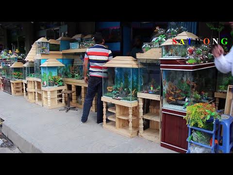 Aquarium Fish Shop Katabon Dhaka Aquarium Accessories In Bangladesh
