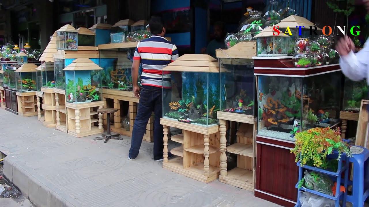 Aquarium Fish Shop Katabon Dhaka Aquarium Accessories In