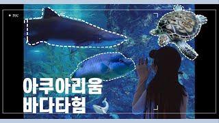예삐 YEPPI [VLOG] 강남/코엑스/아쿠아리움/일…