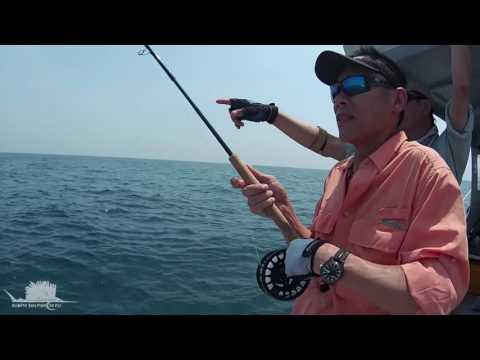 Rompin Sailfish on Fly - Bend it like Ben