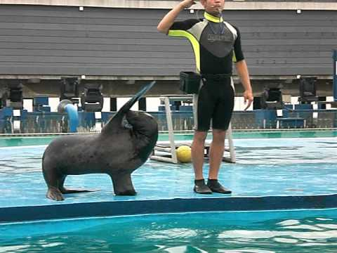 Sea Lion Show at Manila Ocean Adventure Park
