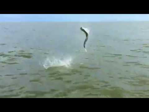 Tarpon Fishing In The Ten Thousand Islands