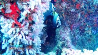 The Diver : พิสูจน์ความงดงามของ