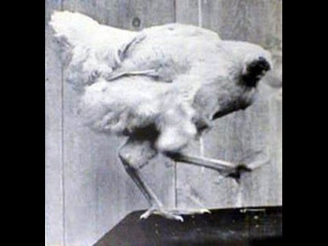 headless chicken monster - photo #28