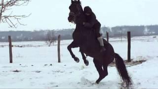 21 december The End of the World ,make mine stallion crazy !