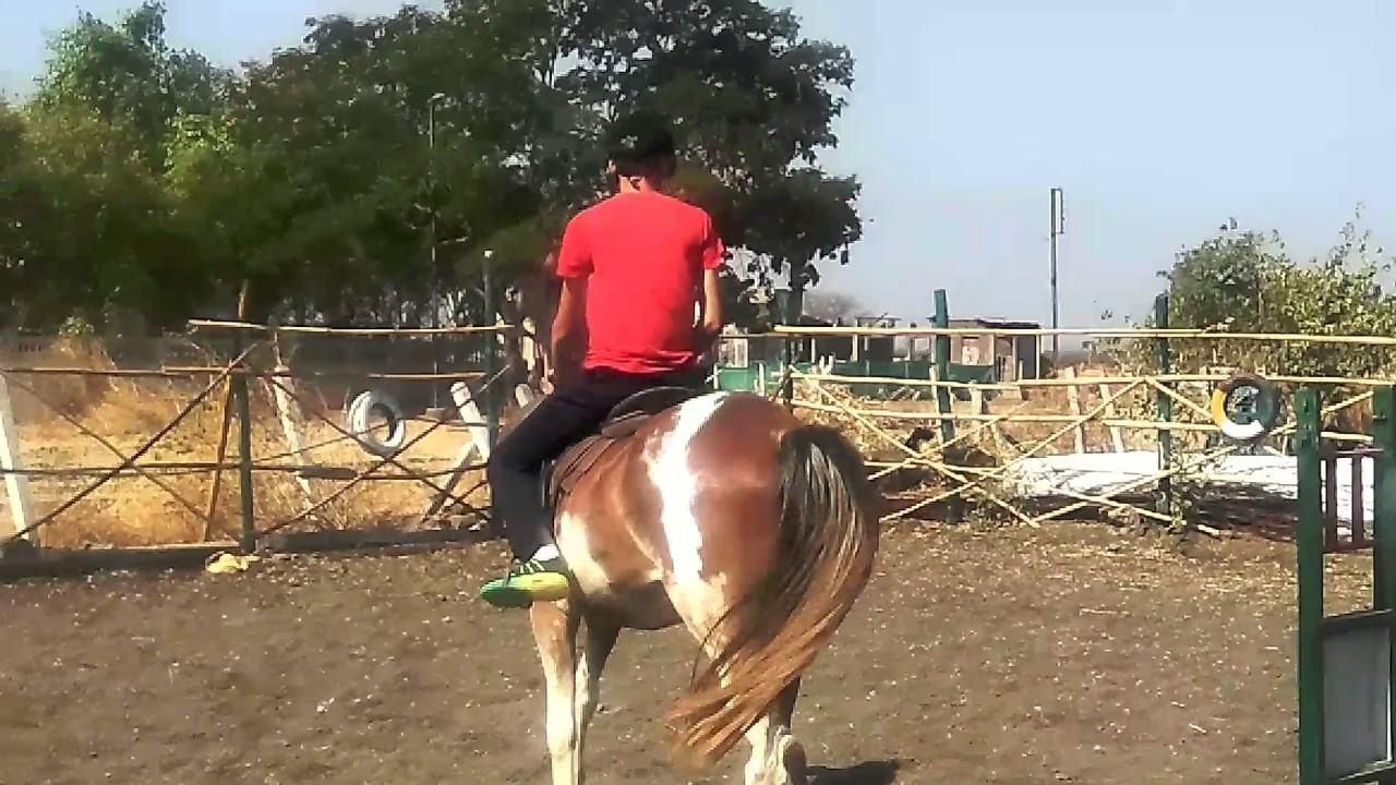 Darshan dabi kalota DEPALPUR horse riding first day depalpur - YouTube for Darshan Horse Farm  56mzq