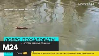 Река в Клязьме очистилась за время пандемии - Москва 24