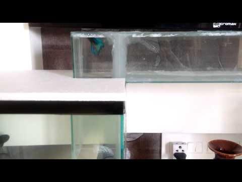 Betta Fish using Aquarium Water Bridge