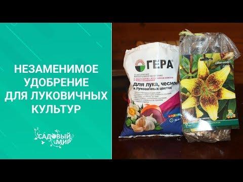Вопрос: При какой температуре могут замерзнуть тюльпаны без снега?