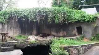 A visit to Dehiwala Zoo, Sri Lanka