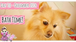 Miss Lottie The Pomeranian Has A Bath With Washbar! December 2014 - Violet Lebeaux Vlogs