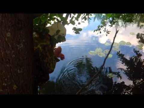 рыбалка в липецкой области видео карп и карась