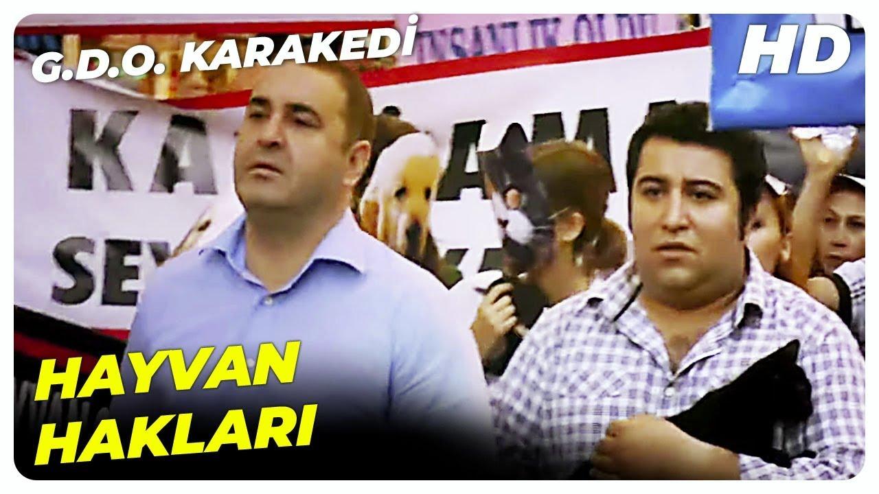 Gürkan, Hayvanları Koruma Eyleminde   G.D.O. Karakedi Şafak Sezer Komedi Filmi