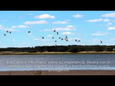 HUMEDAL ARROYO MALDONADO spot 1 HD