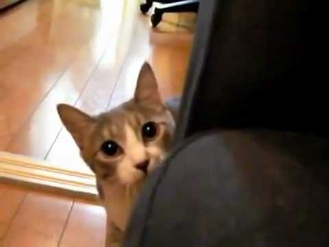 Ninja Stealth Cat Youtube