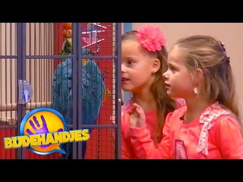 De verborgen camera met papegaai Max   Bijdehandjes   SBS6