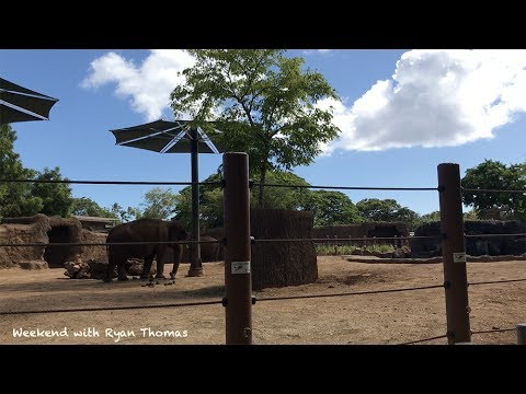 Weekend with Ryan Thomas at Honolulu Zoo in Hawaii