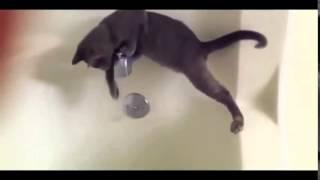 Смешные коты! Новое смешное видео про кошек! Подборка смешных видео 2014