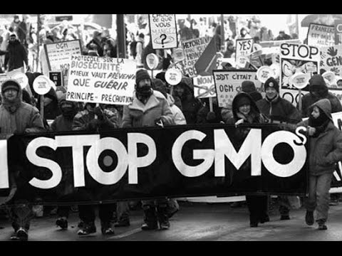 The Danger of GMO's