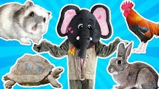 Loly & Falfool - Falfool & Pets - لولي وفلفول - فلفول والحيوانات الأليفة