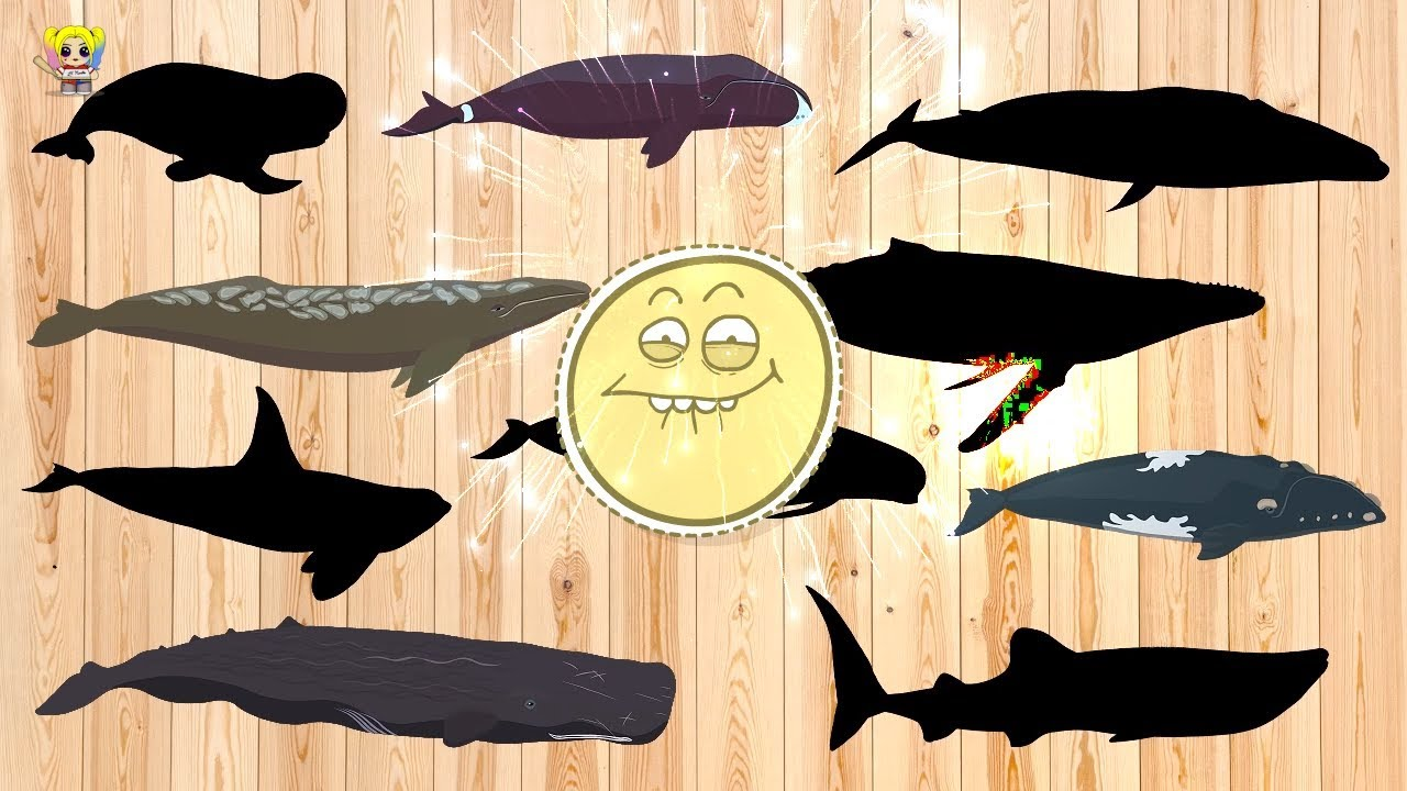 Collection Whale Wrong body | Learn Sea Animal Names and Sounds for children | MiMi TV