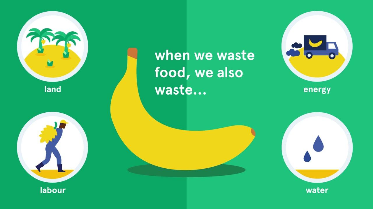 waste no food - youtube