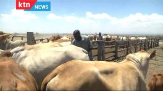 The Chamwada Report 17th January 2016 - Episode 27 - [Part 2] Beef Cattle Farming in Kenya