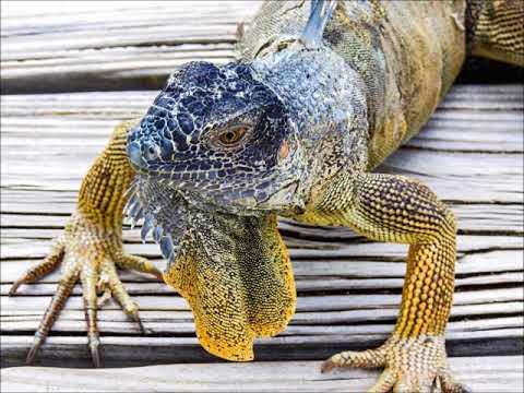 ZF2ZE Grand Cayman Island. From dxnews.com