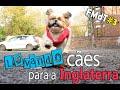FMdT #3 - Como levar cachorros para o exterior