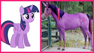 My Little Pony All Characters IN REAL LIFE @WANA Plus