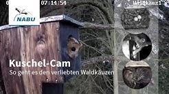 Kuschel-Cam: Verliebte Waldkäuze
