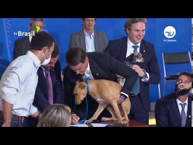 Lei sancionada aumenta pena para maus-tratos a cães e gatos