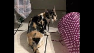 Accidentally Finding Momma Cat?? - #3 - Saving Feral Cat Colony