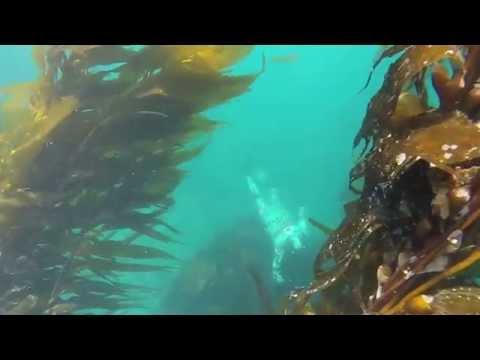 Freediving Course FII level 1 promo ( Aquatica freediving)