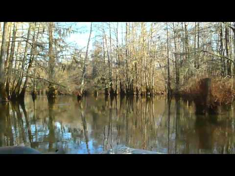 A Voyage on the Swamps of Lake Marion