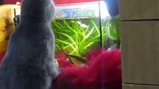 Котик и рыбки