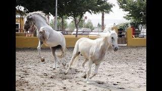 Airbnb Experiences: Creative Travel Video Valencia + Horse Riding on Mediterranean