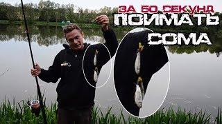 Как поймать сома за 50 секунд