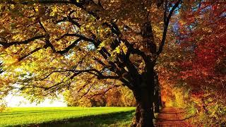Leaf Fall
