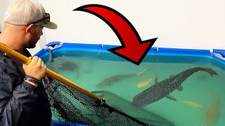 CAPTURING BIG FISH From LEAKING POND! *EMERGENCY*