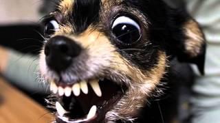 Стрижка собак(Оказывается, быть грумером не так просто. Надо не только обладать определенными профессиональными качеств..., 2016-04-09T19:59:20.000Z)
