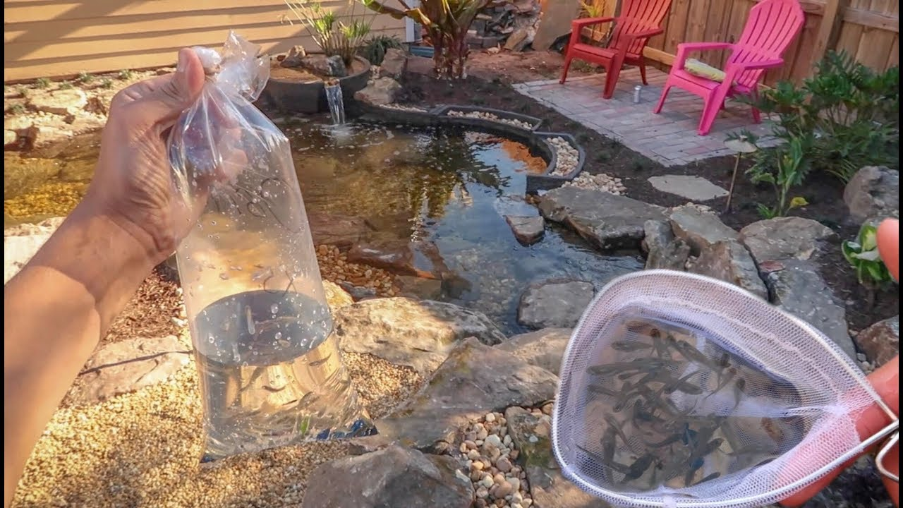 fish-for-my-new-pond