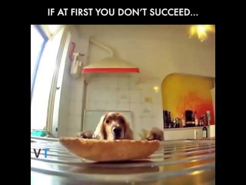 if at first you don't succeed... - funny dog video