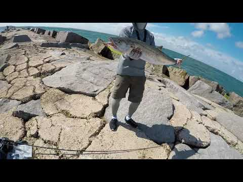 King Mackerel Limit 1 Hour,Fishing At Port Aransas , TX    Port A Fishing