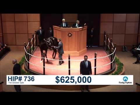 The October Sale (2017): Hip 736 c. Medaglia d'Oro sells for $700,000