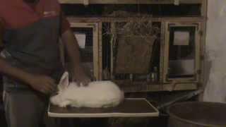 Как правильно брать кролика из клетки