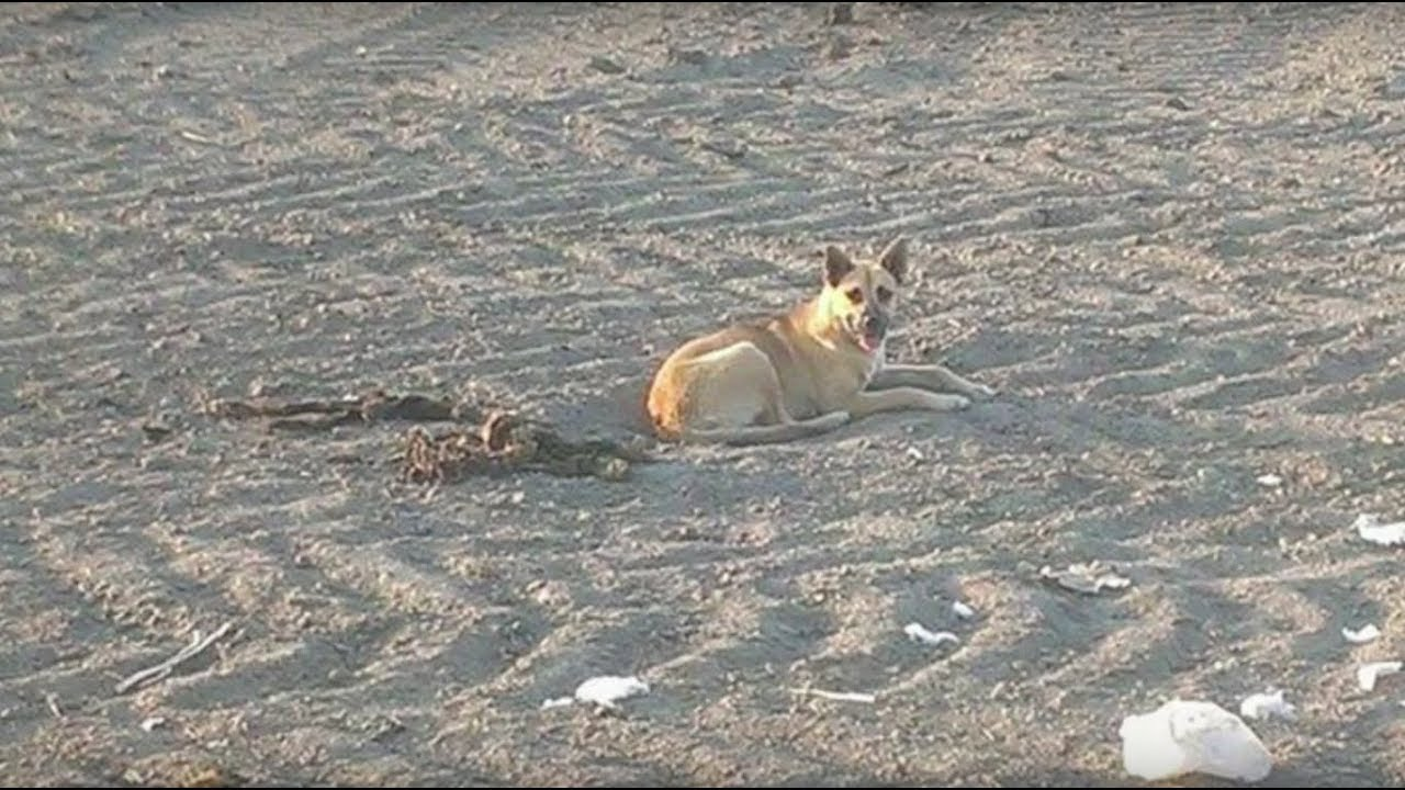this-dog-lived-in-ascorching-desert-for-months-then-rescuers-discovered-the-heartbreaking-reason-why